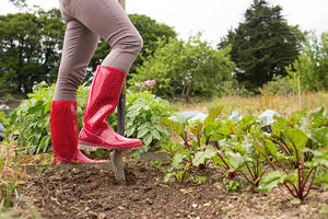 Woman wearing jeans and red rubber boots in her garden working with a shovel