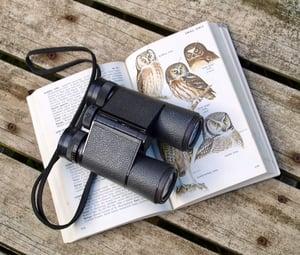 binoculars and bird identification book