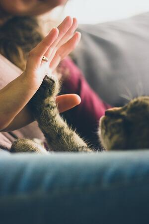therapy cat giving high five to human owner