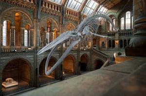 national-history-museum-dinosaur