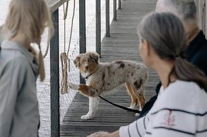 older couple looking at pet dog on a dock