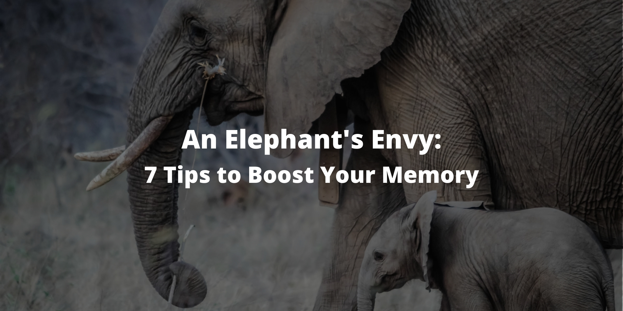 An Elephant's Envy: 7 Tips to Boost Your Memory