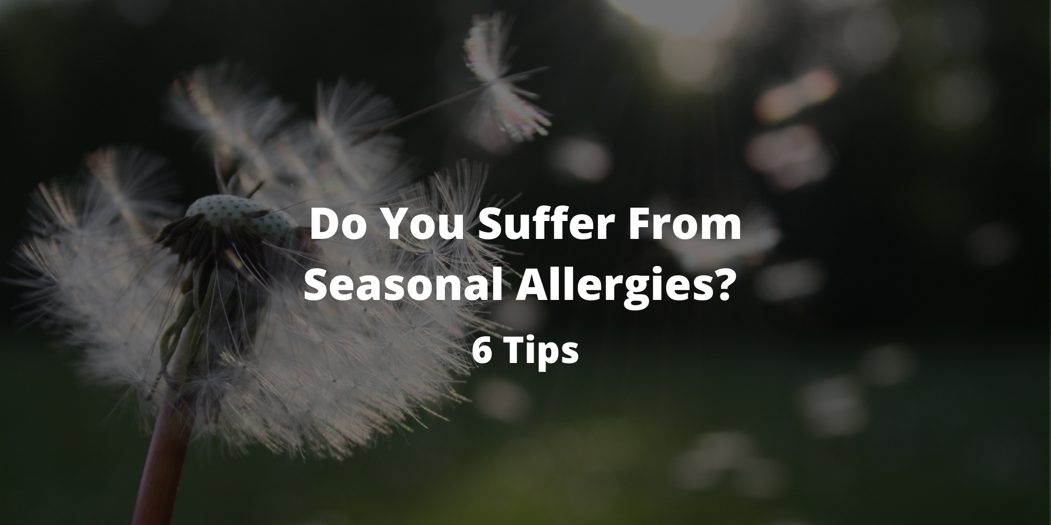 Do You Suffer From Seasonal Allergies? 6 Tips