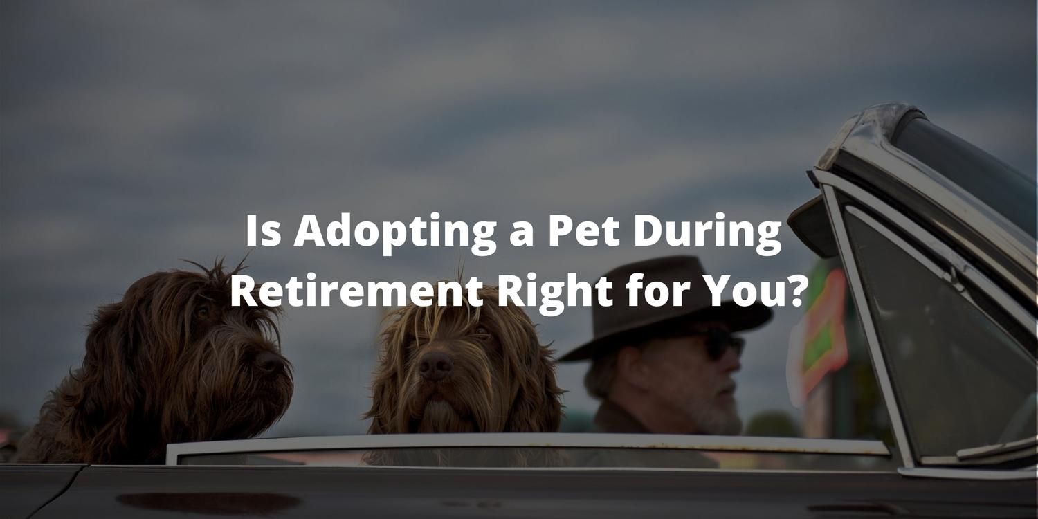Is Adopting a Pet During Retirement Right for You?