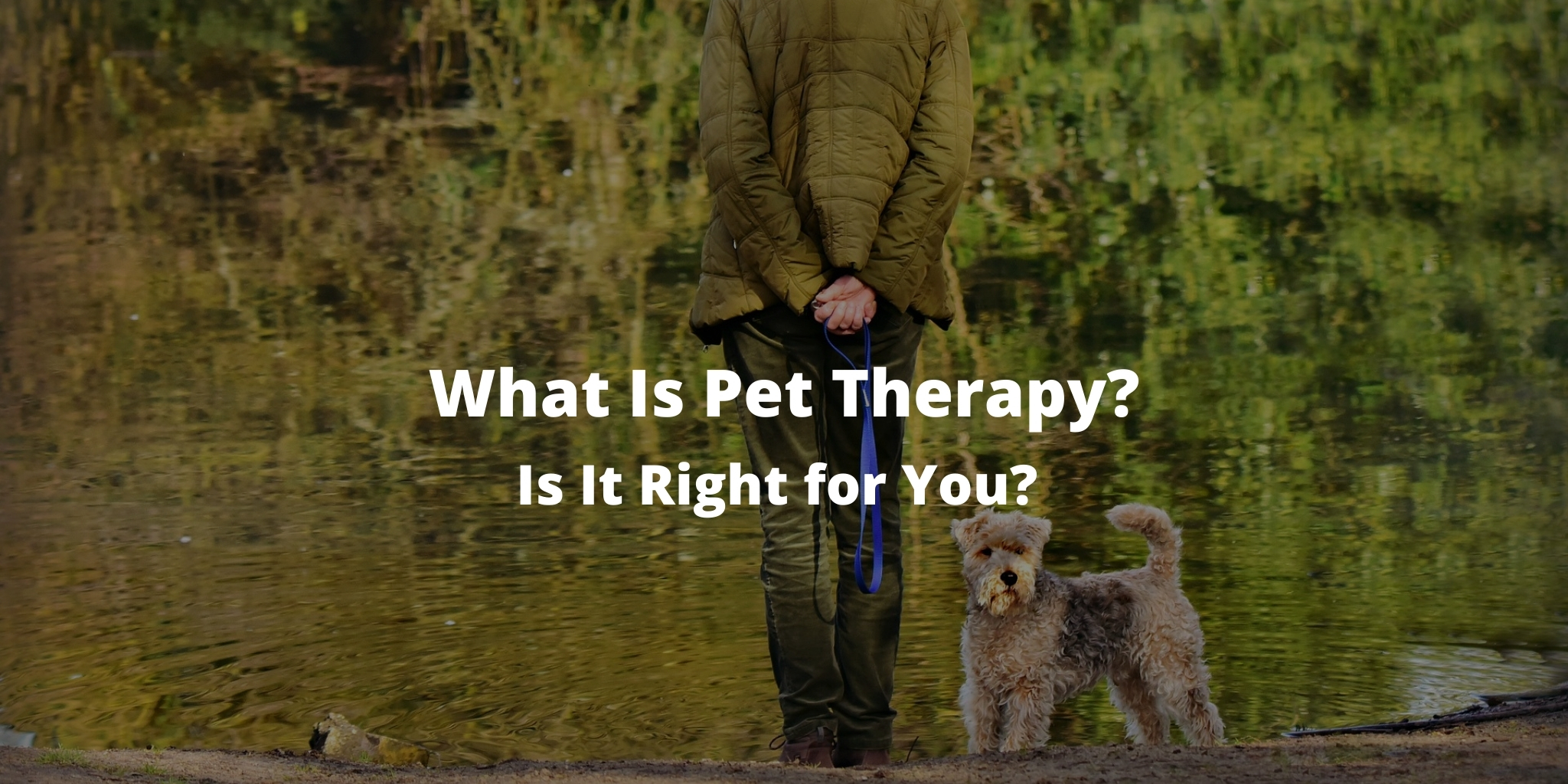 What Is Pet Therapy? Is It Right for You?